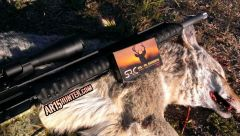 Coyote Down!