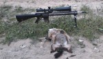 Hunting Ground Hogs with an AR15 – helping farmers one shot at a time.