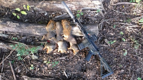 Lightweight Critter Getter – Squirrel Hunt with Tennessee Arms Polymer Lower
