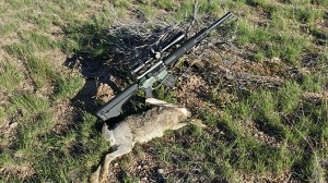 Hunting the Giant Jackrabbits of Arizona with an AR15