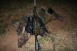 Texas Dove Hunt Turns Into a Boar Hunt