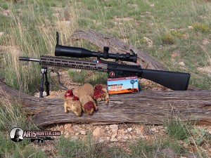 Australian Outback Ammo Prairie Dog Hunt Report
