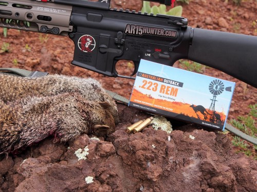 Australian-outback-ammo-arizona-hunt-report-squirrels-1