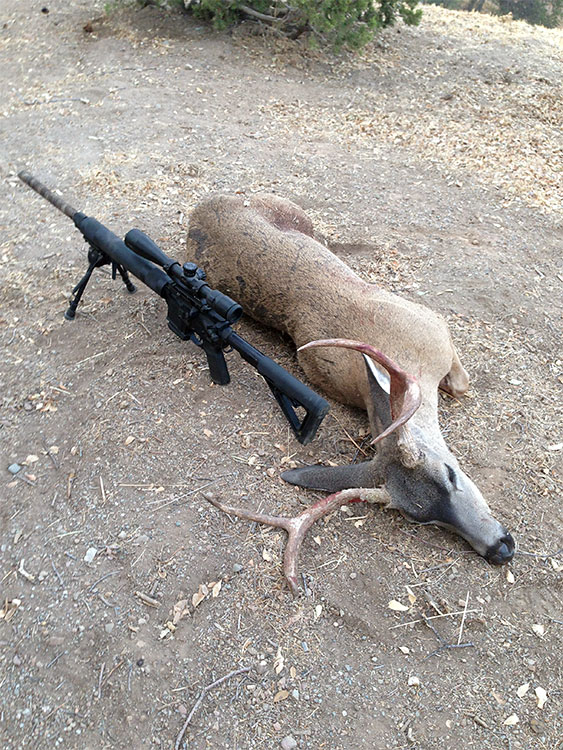 Hunting California Deer with an AR15 in 5 56 Caliber - AR15