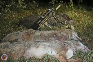 A Mixed Bag of Coyotes and a Hog taken by the Author with his LWRC Six8 Razorback rifle.