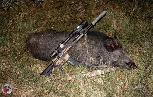 A nice Hog taken with the LWRC Six8 Razorback rifle.