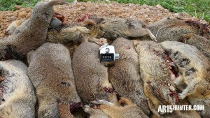The Ground Squirrel count on day one!