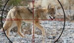 Prepping for Predator Hunting – The Basics