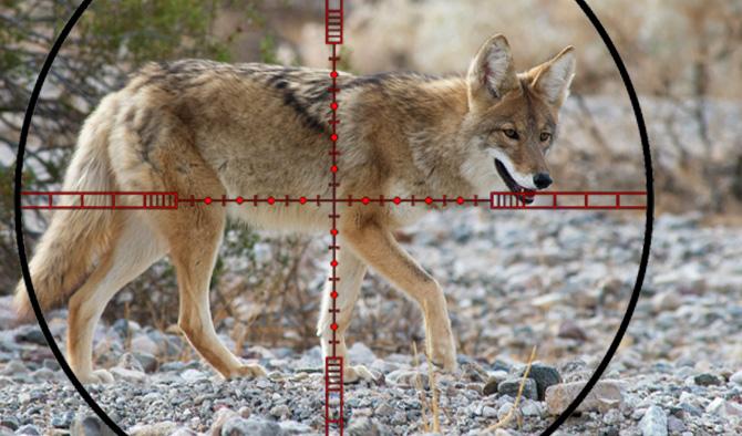 Prepping for Predator Hunting – The Basics