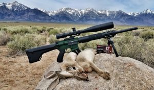 Jackrabbit Hunting in California with an AR15