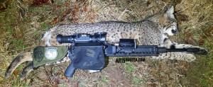 65-Grendel-Bobcat-Hunt-1