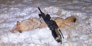 65-Grendel-Coyote-Hunt-1