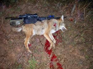 65-Grendel-Coyote-Hunt-2